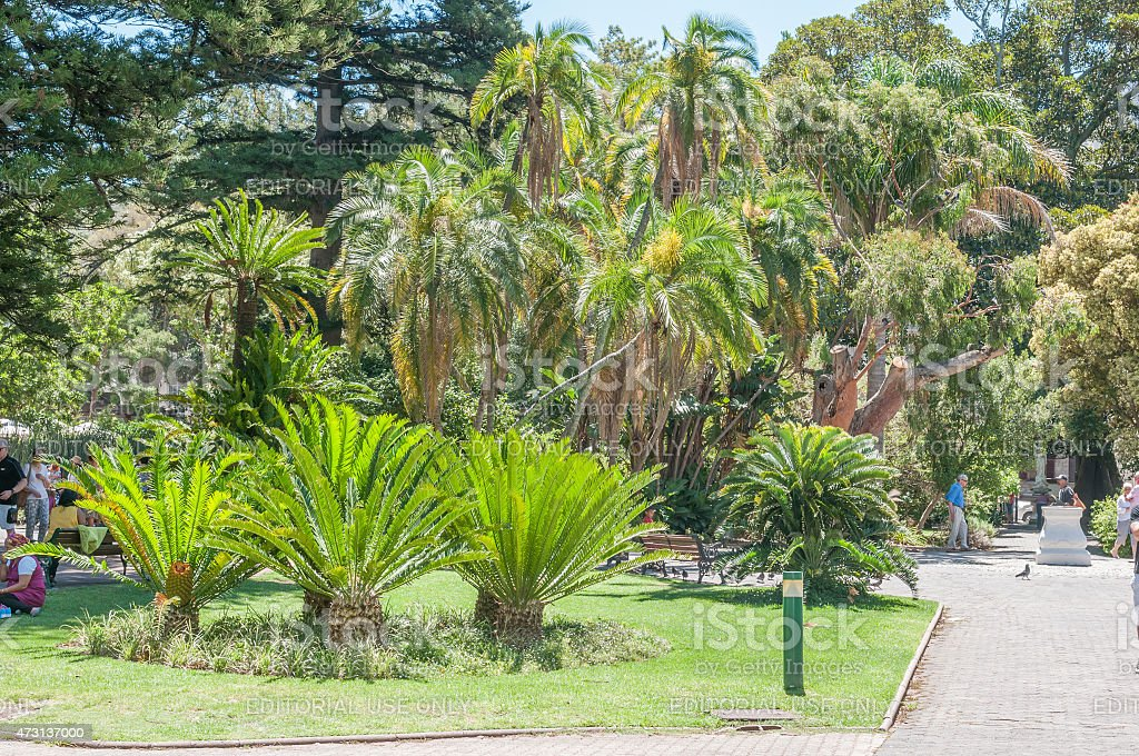 Cycads and palm trees in the Company Garden stock photo