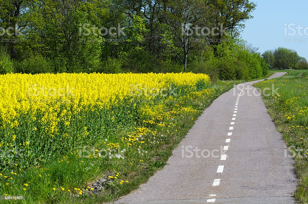 Cycleway by spring stock photo