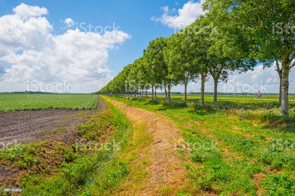 Cyclists biking on a countryside road in spring stock photo