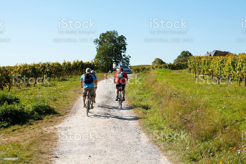 Cycyling between vinyards stock photo
