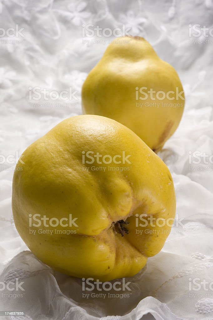 Cydonia or Quince stock photo