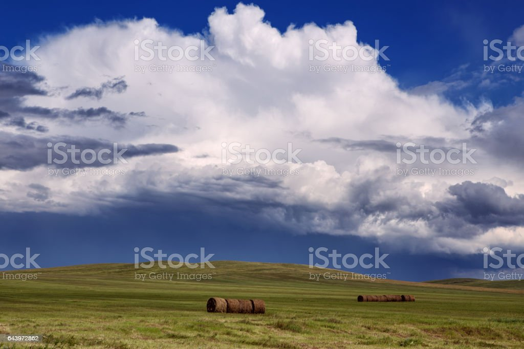 Cylindrical rollers of hay on the background of the cloudy sky. stock photo