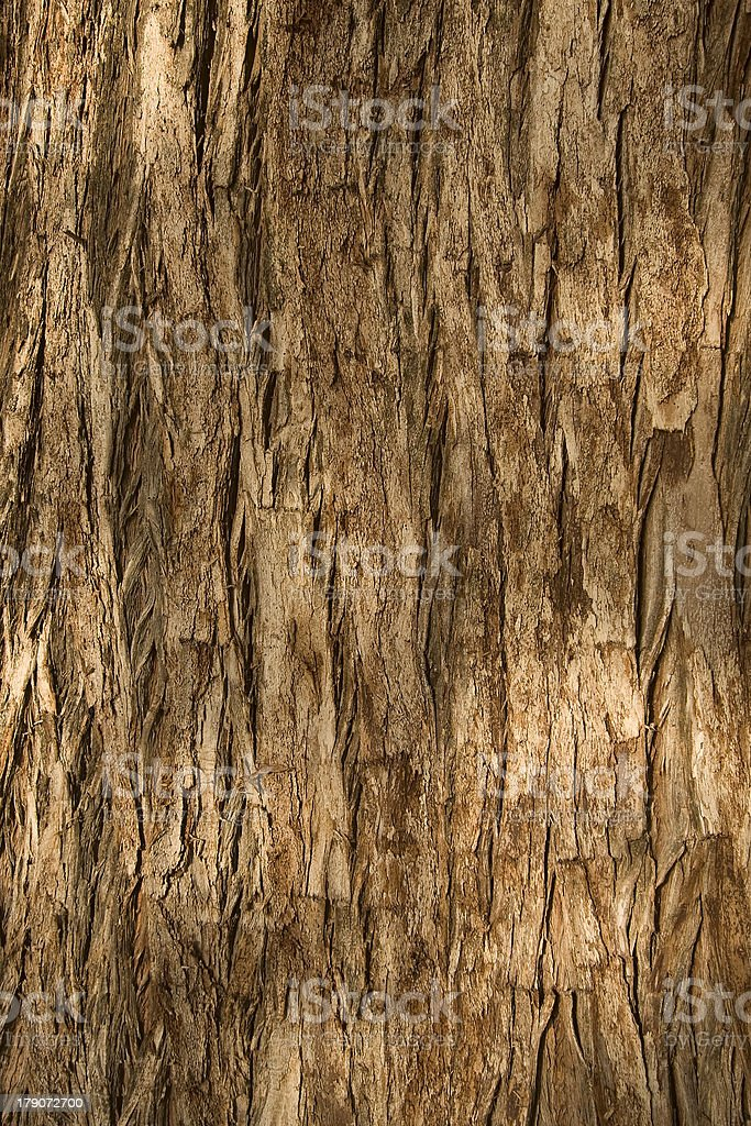 Cypress Bark royalty-free stock photo