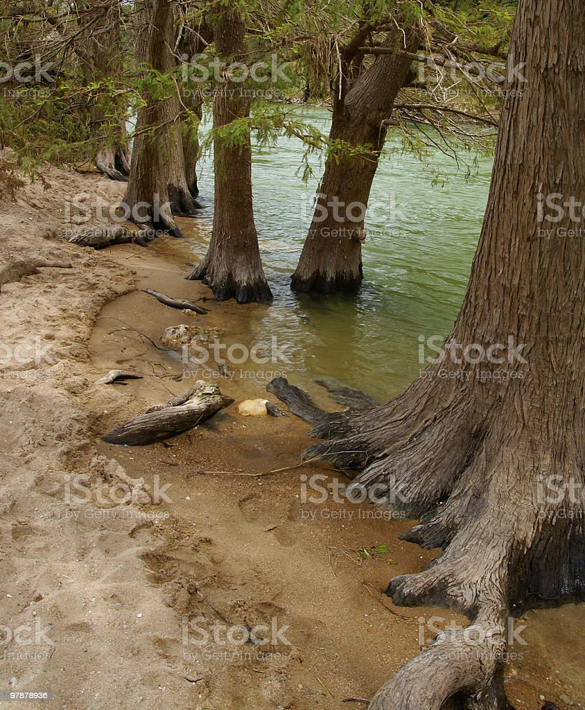 Cypress beach at Pedernales River State Park in Texas royalty-free stock photo