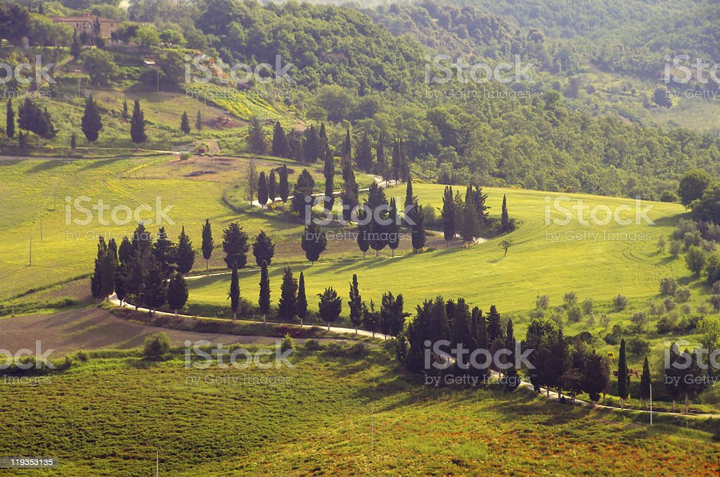 cypress curve royalty-free stock photo