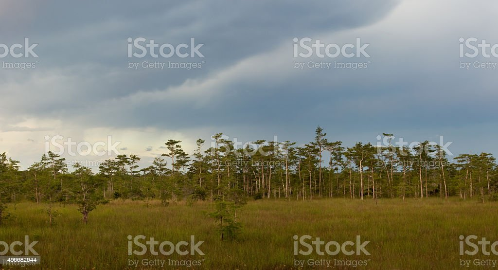 Cypress Dome and Sawgrass Prairie in Everglades stock photo
