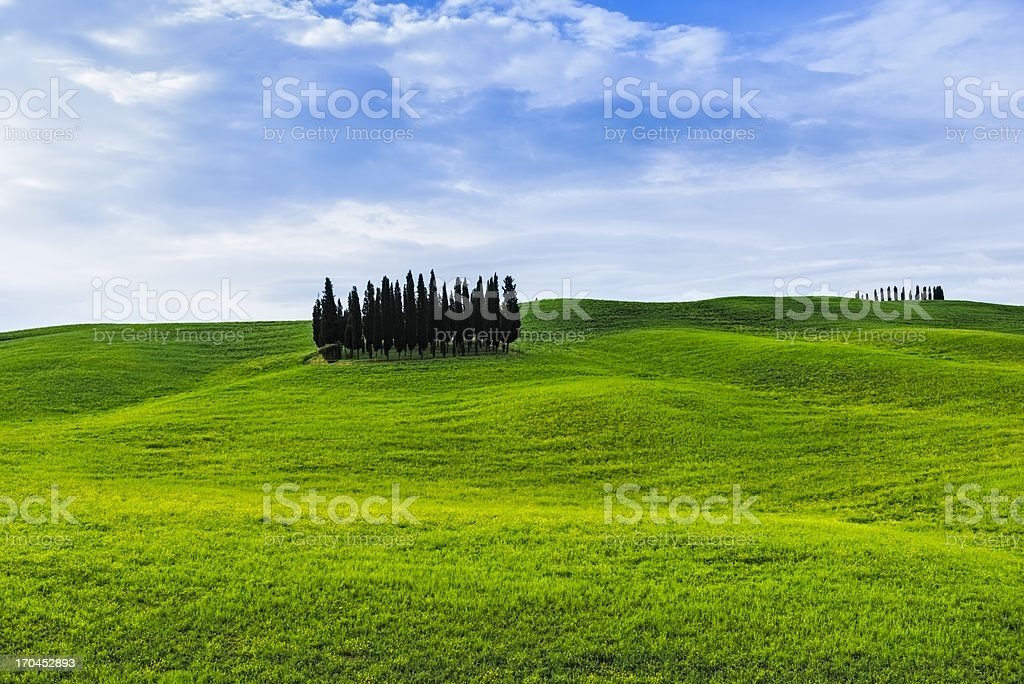 Cypress group and Spring in Tuscany royalty-free stock photo
