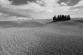 Cypress grove in Val 'd'Orcia