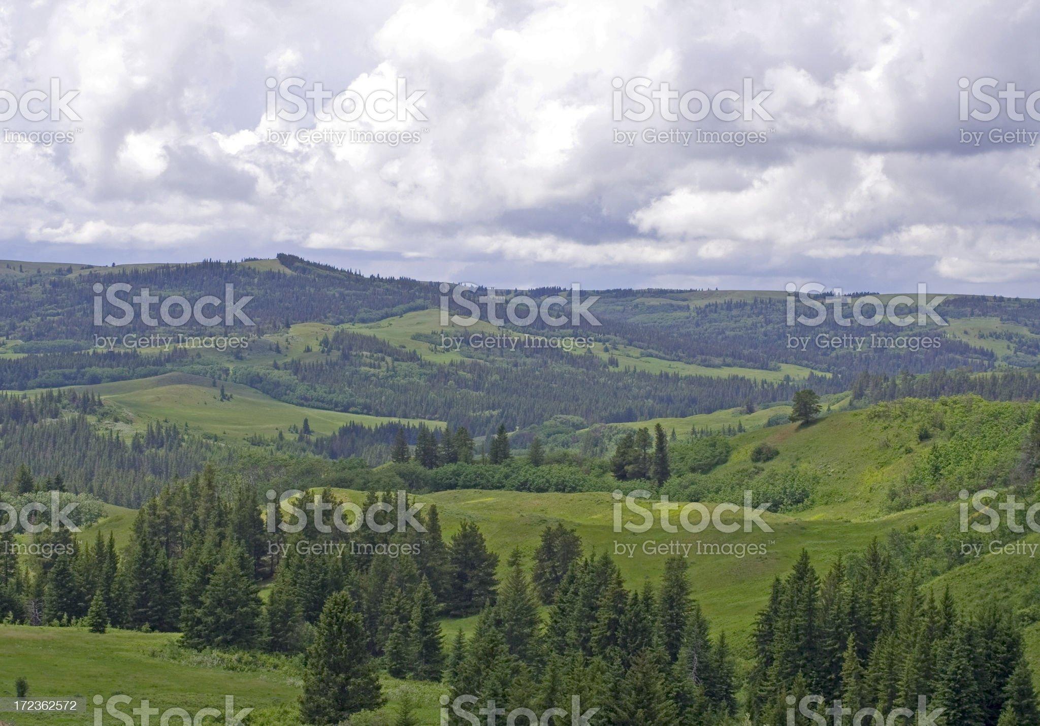Cypress Hills royalty-free stock photo