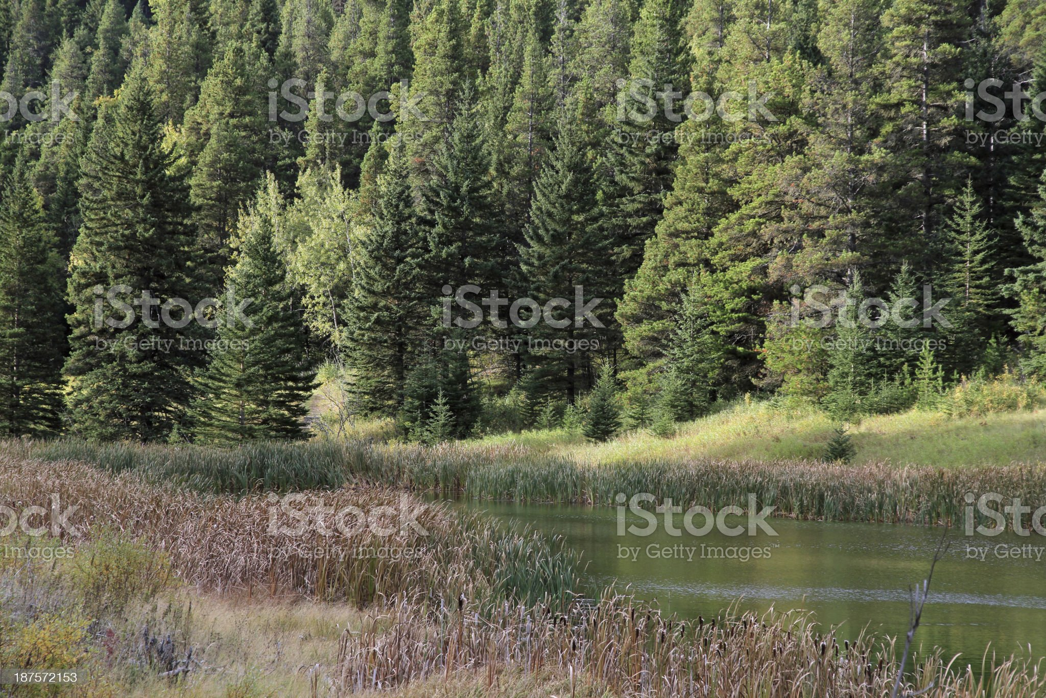 Cypress Hills Pond royalty-free stock photo