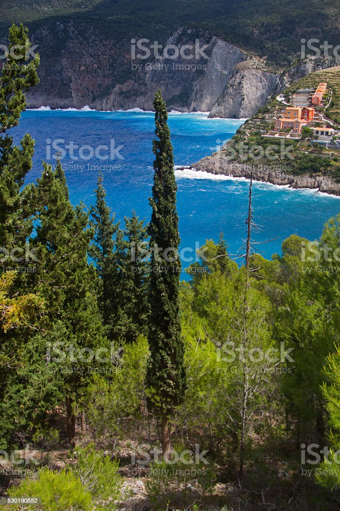 Cypress in forest near Ionian sea stock photo