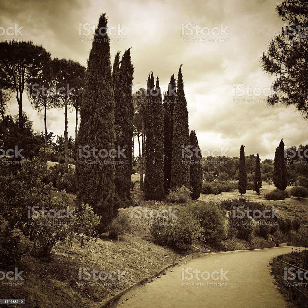 cypress in italica royalty-free stock photo