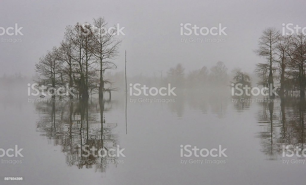 Cypress in Winter stock photo