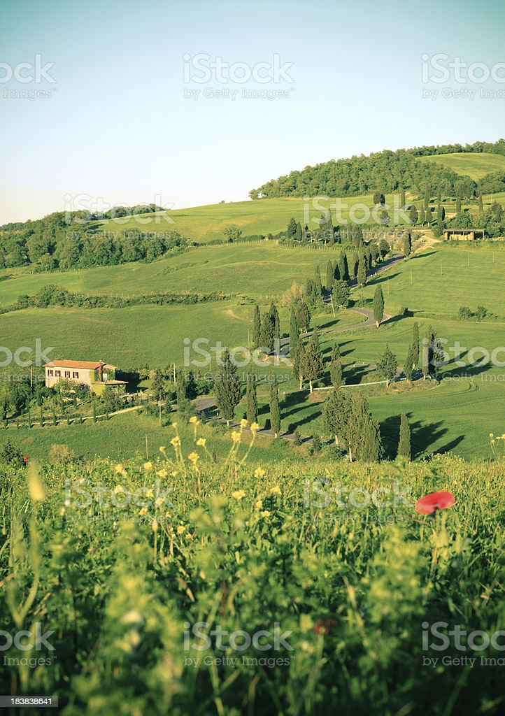 Cypress lined road in Monticchiello, Val d'Orcia Tuscany Italy royalty-free stock photo