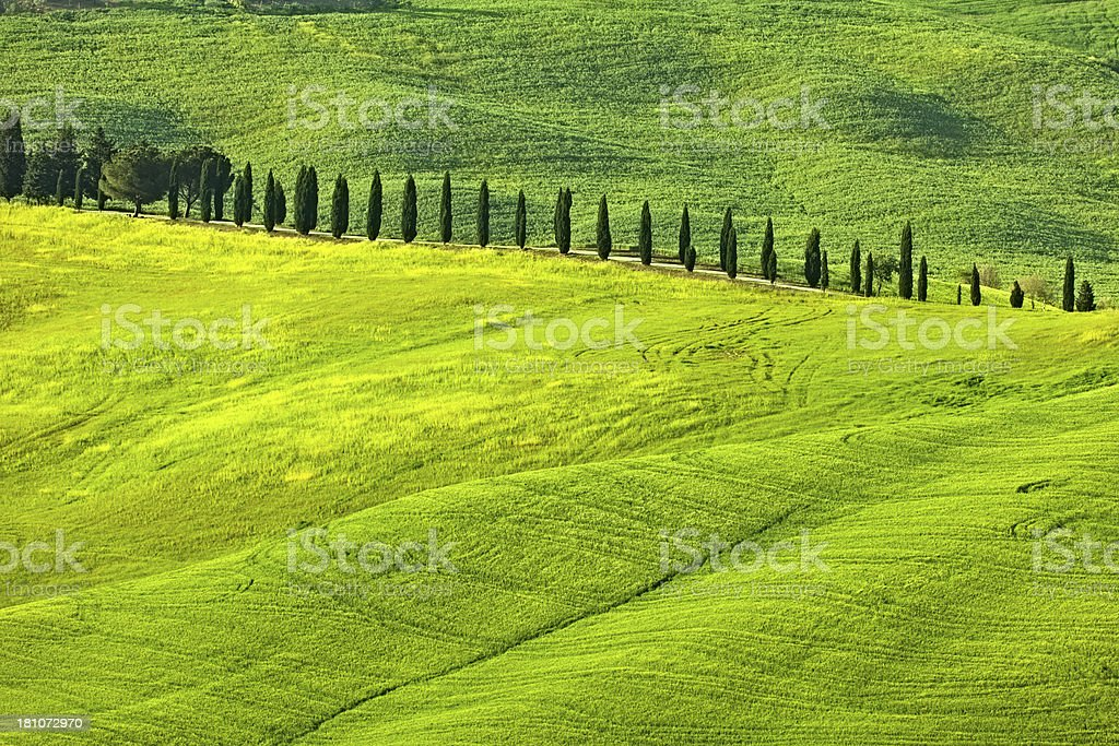 Cypress Lined Road in Rolling Landscape, Tuscany, Italy royalty-free stock photo