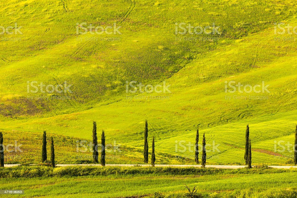 Cypress Lined Road in Rolling Landscape, Tuscany, Italy stock photo