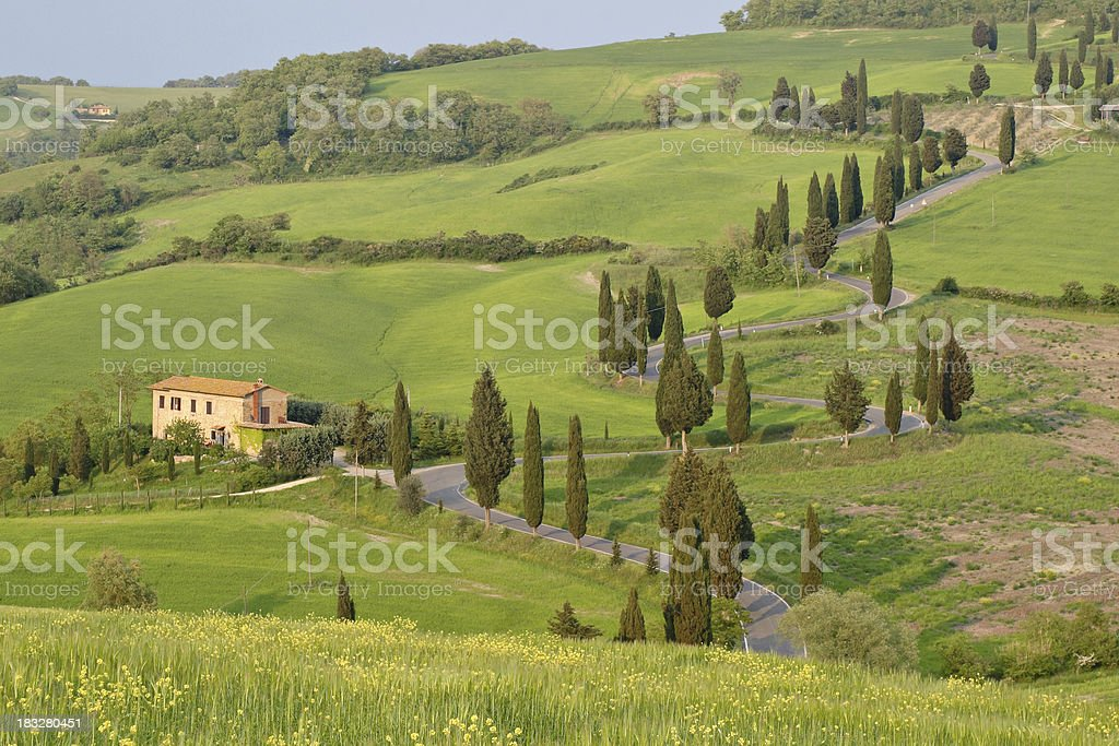 Cypress lined road royalty-free stock photo