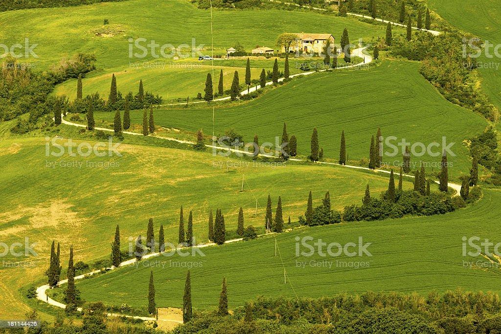 Cypress Lined Winding Road, Tuscany, Italy royalty-free stock photo