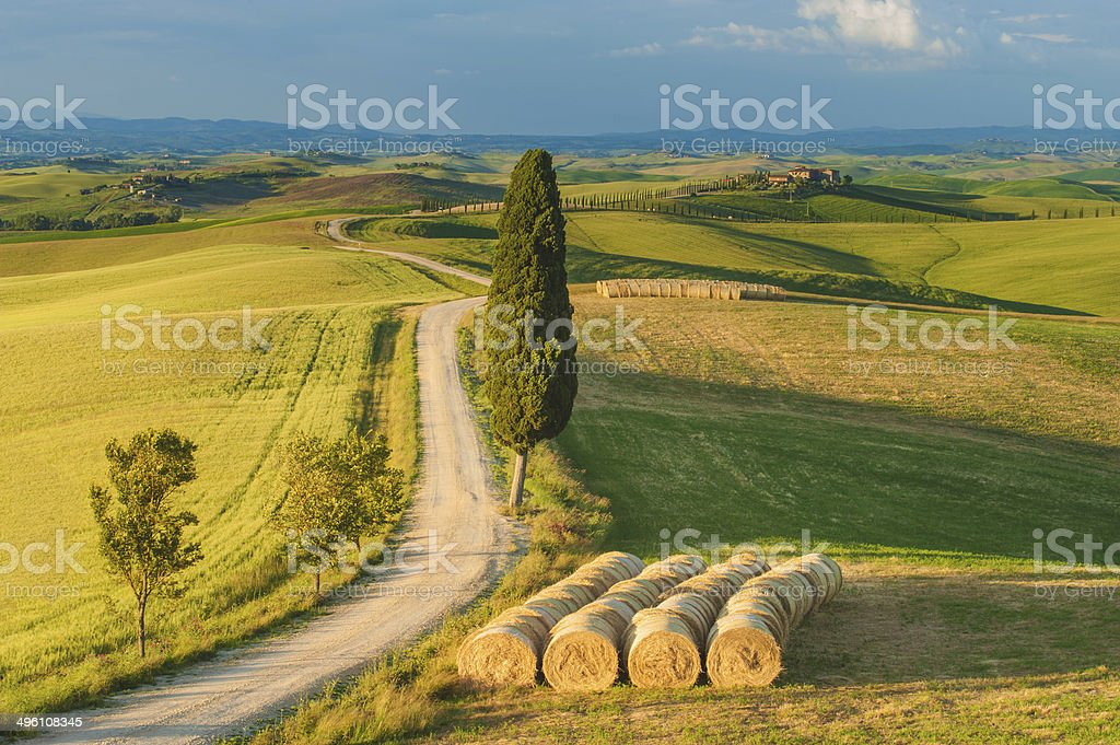 Cypress on the road in the middle of Tuscan countryside stock photo