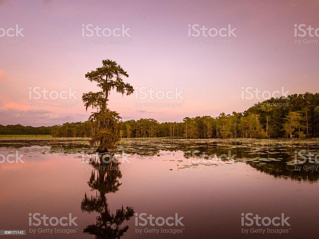 Cypress Reflections at Sunset stock photo