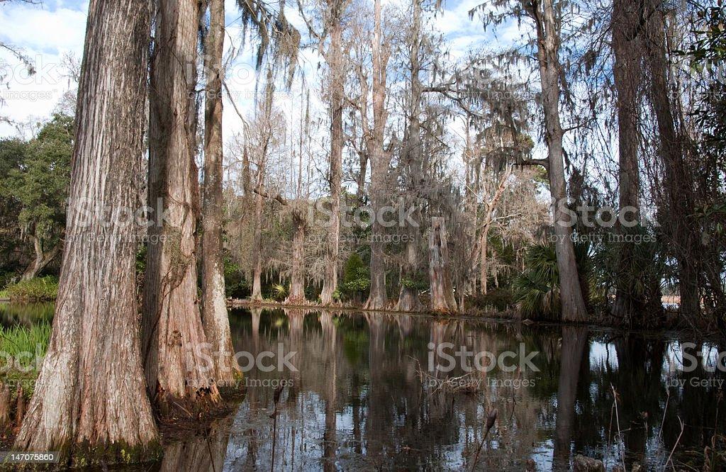 Cypress Reflections on Magnolia Plantation royalty-free stock photo