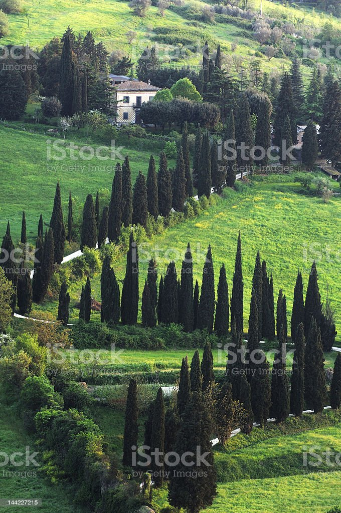 cypress road in umbria countryside stock photo