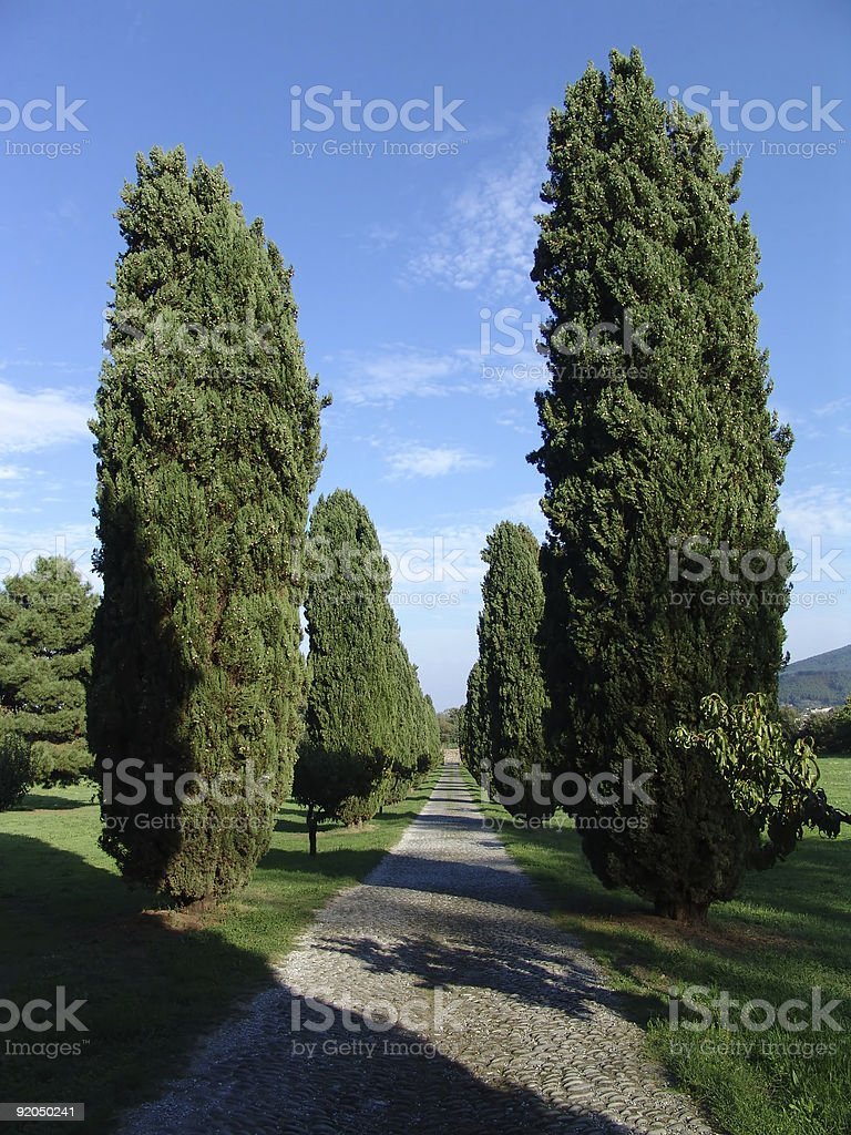 cypress road royalty-free stock photo