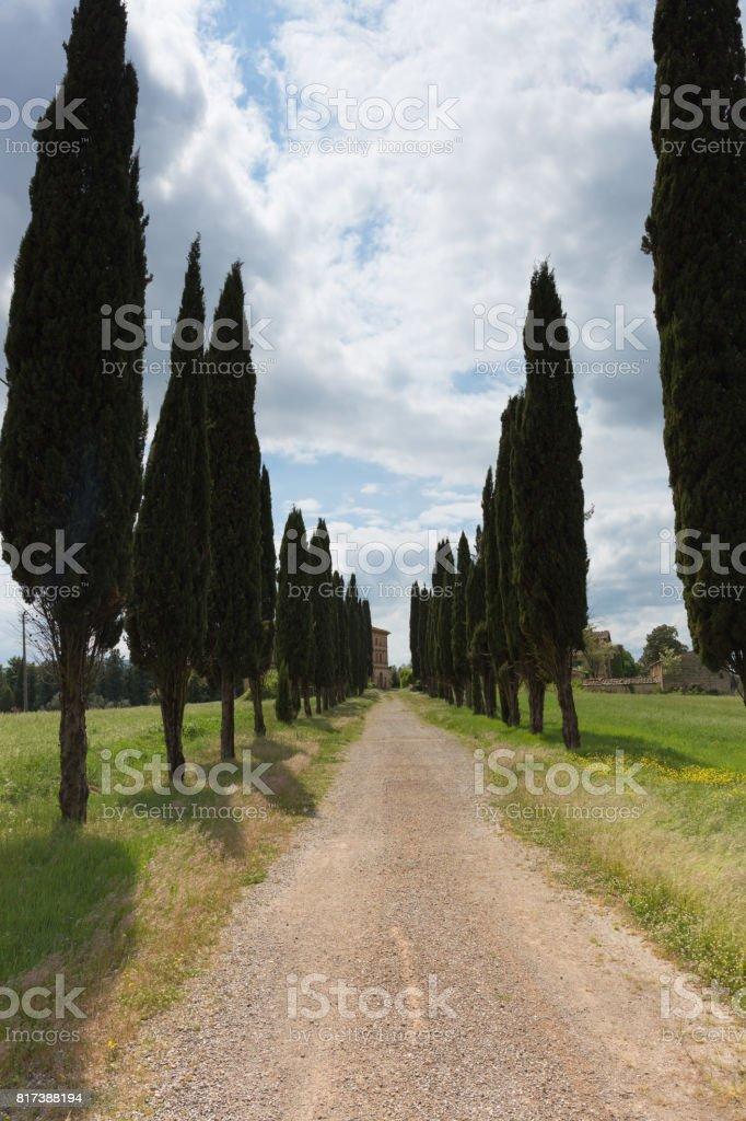 Cypress road Tuscany stock photo