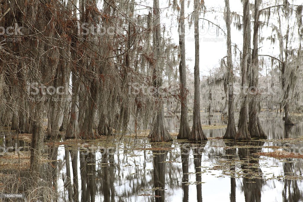 Cypress Swamp royalty-free stock photo