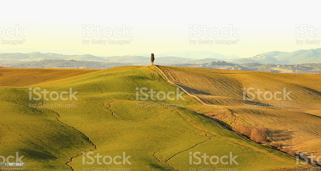 Cypress tree and rolling hills rural landscape. Tuscany. Italy royalty-free stock photo