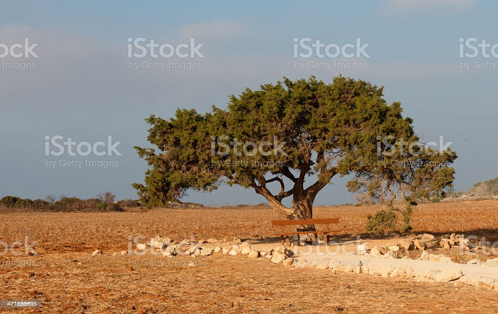 Cypress tree, Cyprus stock photo