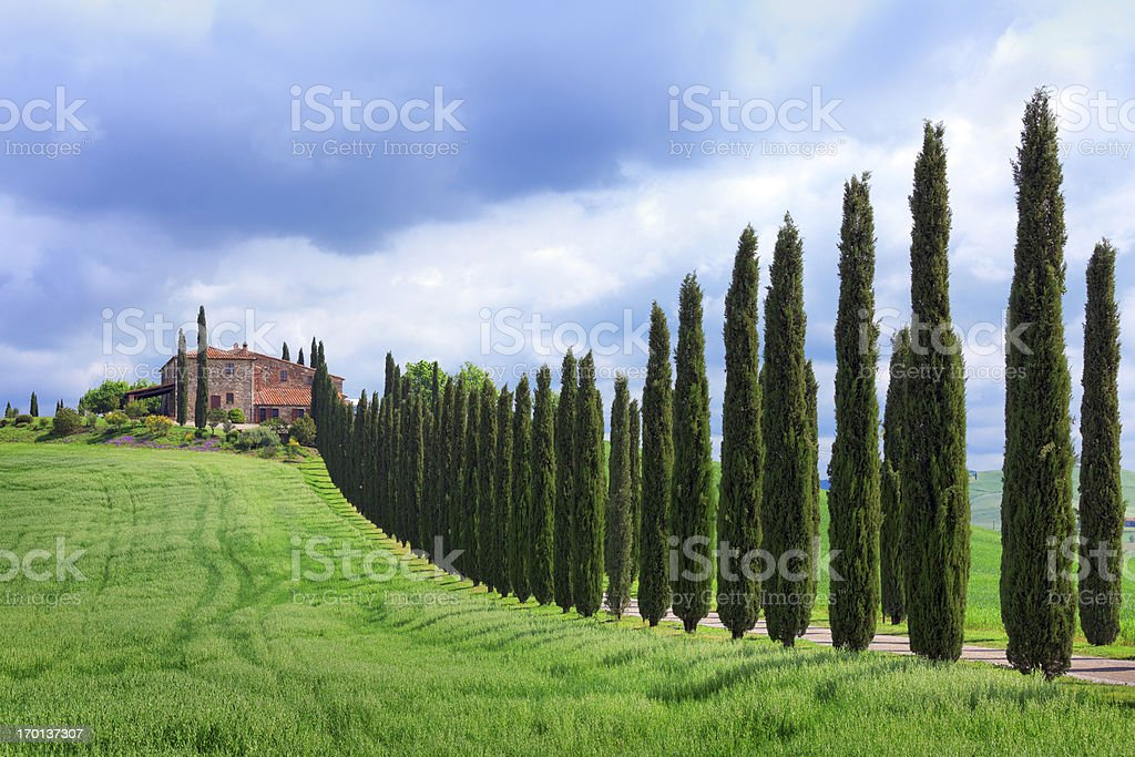 Cypress tree lined road in Tuscany royalty-free stock photo