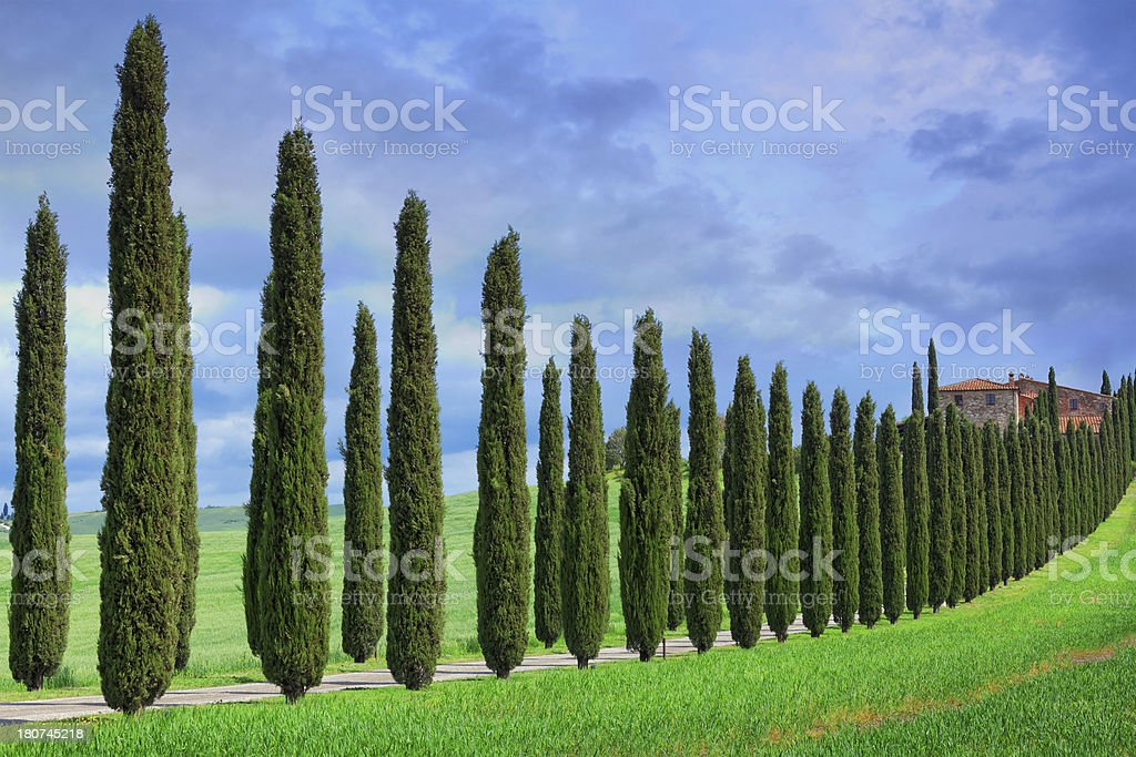 Cypress tree lined road in Tuscany stock photo