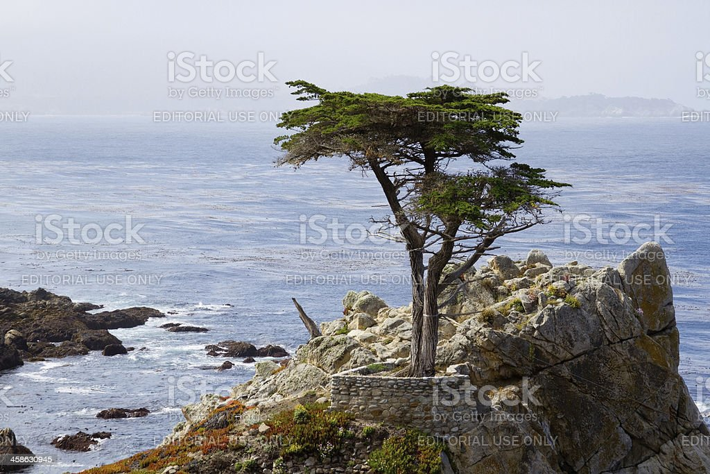 Cypress Tree on a Cliff stock photo