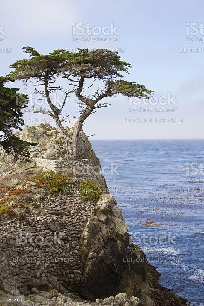 Cypress Tree on a Hill stock photo
