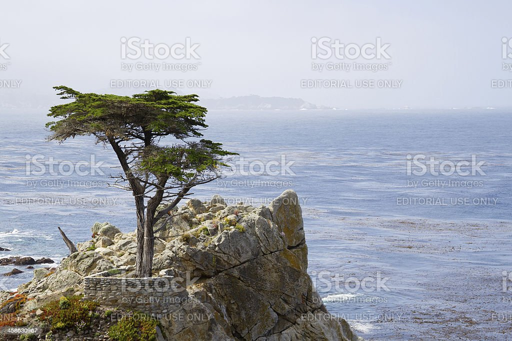 Cypress Tree on Rocks stock photo