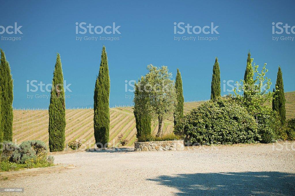 Cypress Tree on Tuscany Hill, Chianti - Florence stock photo