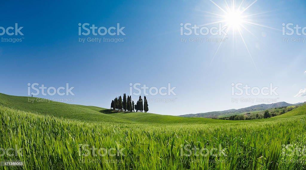 Cypress tree on Tuscany landscape royalty-free stock photo