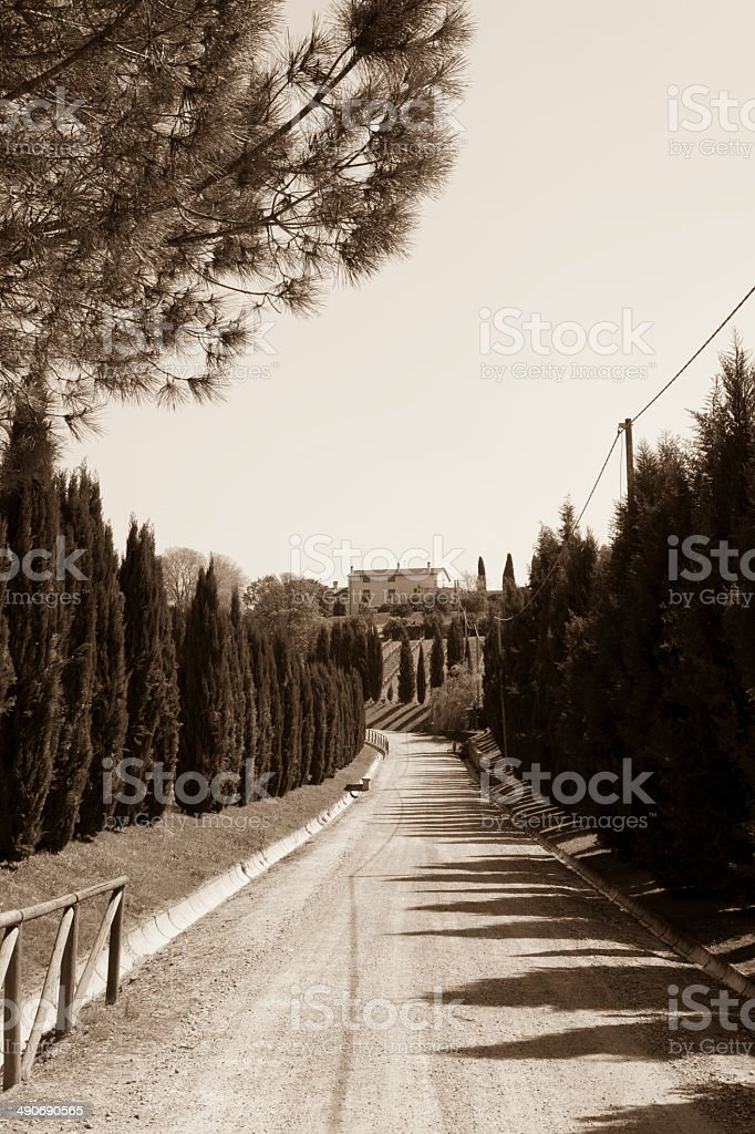 Cypress Tree Road on Tuscany Hill, Chianti - Florence royalty-free stock photo