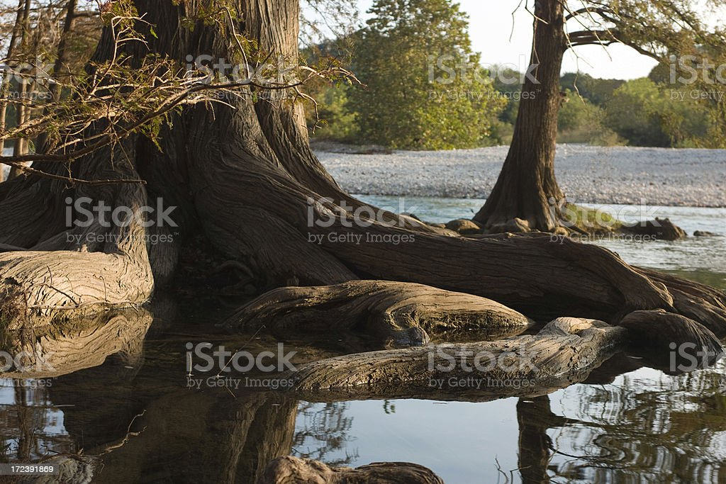 Cypress Tree Roots reflected in Texas Hill Country's Frio River royalty-free stock photo