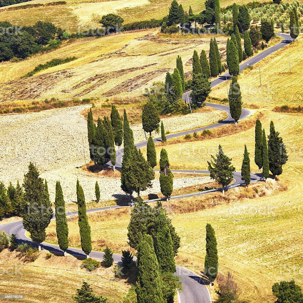 Cypress tree scenic road in Monticchiello near Siena, Tuscany, Italy. stock photo