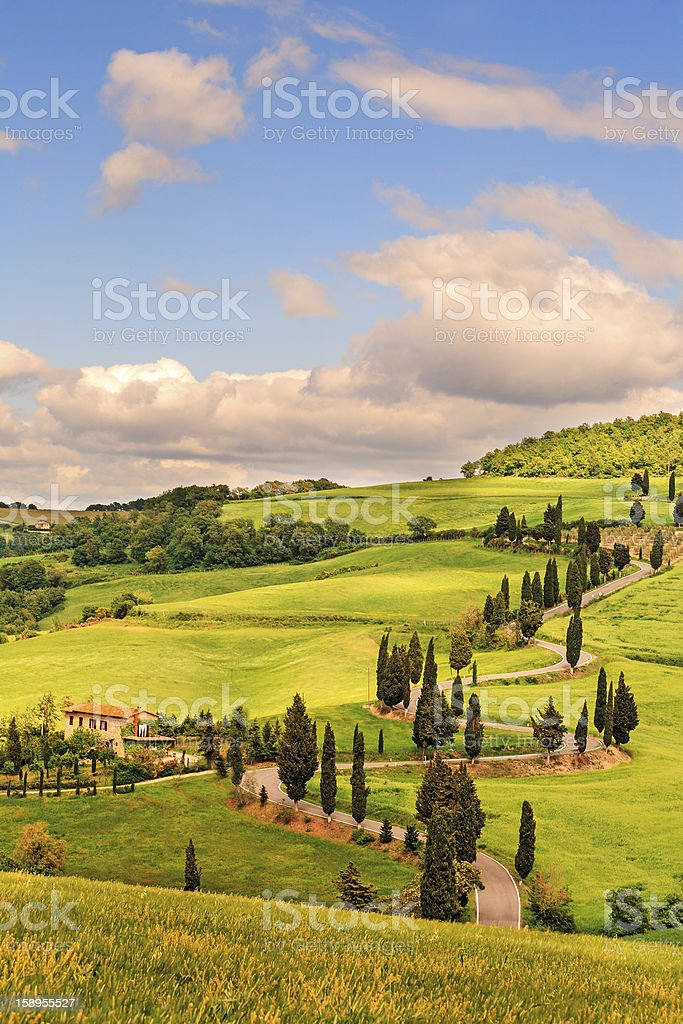 Cypress tree-lines up stock photo