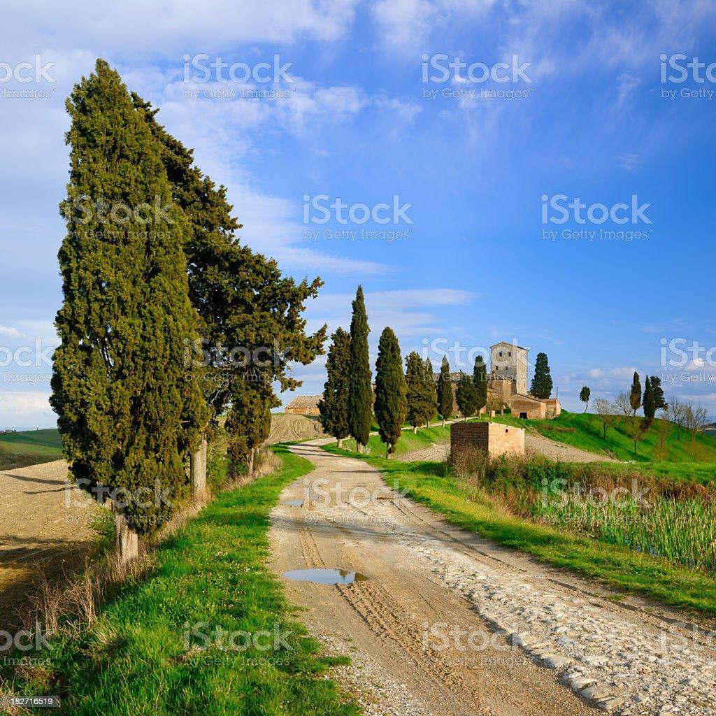 Cypress Trees along Winding Dirt Road Leading to Tuscany Farm royalty-free stock photo