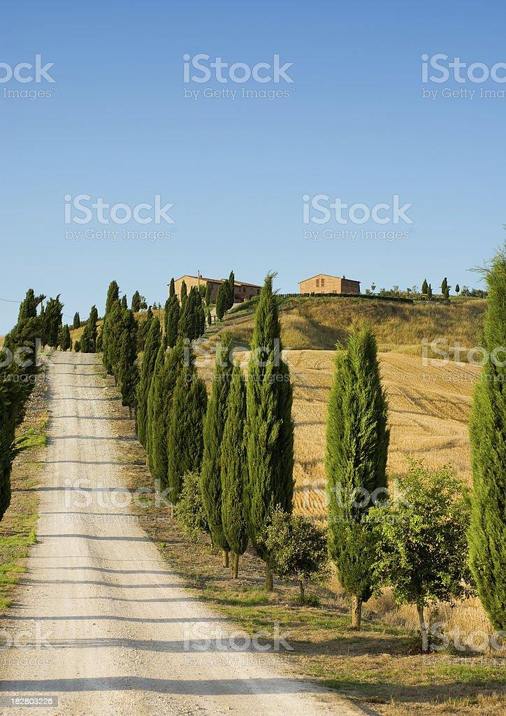 Cypress trees and farmhouse of Toscany royalty-free stock photo