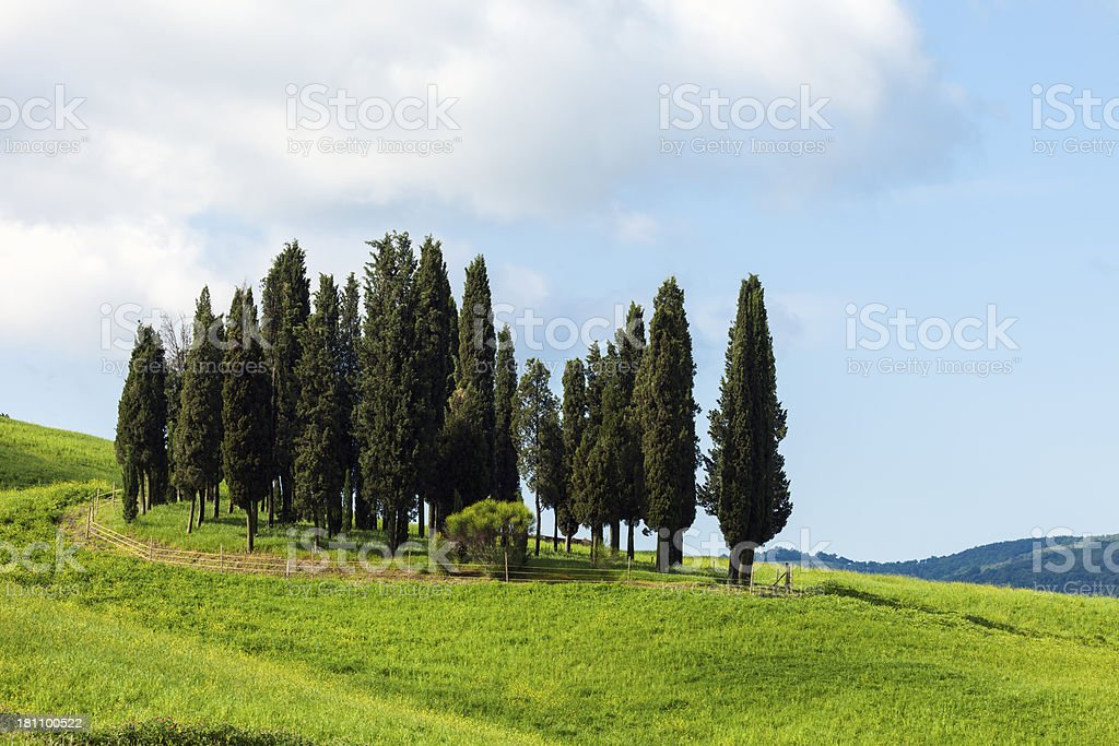 Cypress Trees and Rolling Hills, Tuscany, Italy stock photo