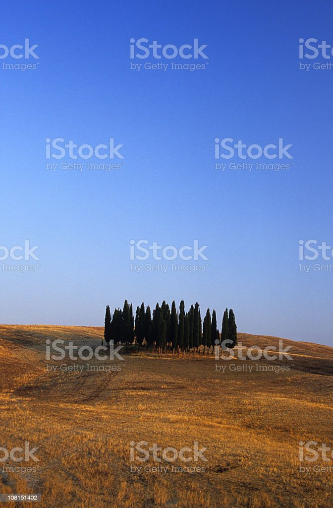 Cypress Trees in Tuscan Landscape, Italy royalty-free stock photo