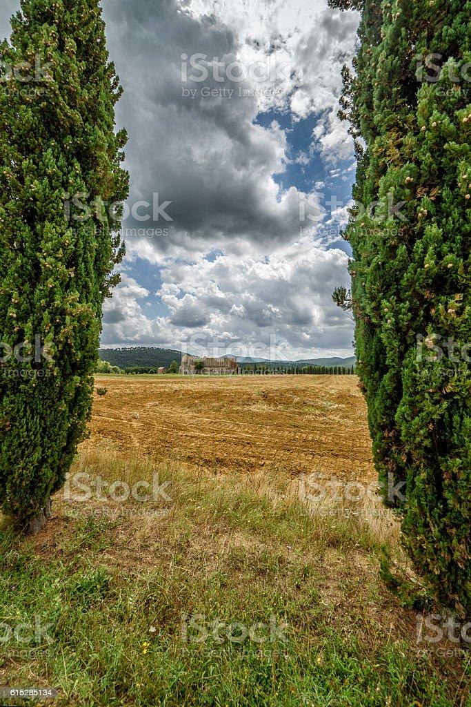 Cypress trees in Tuscany, Italy, and San Galgano cathedral stock photo