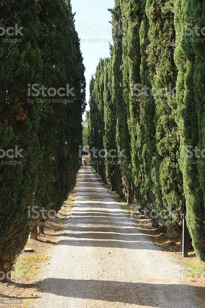 Cypress Trees in Tuscany royalty-free stock photo