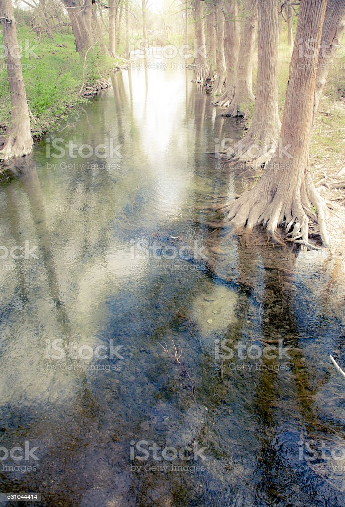 Cypress trees line Little Blanco river in central Texas, USA. stock photo