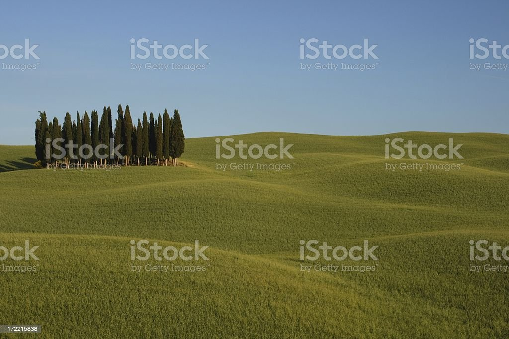 Cypress Trees of Green Orcia Valley royalty-free stock photo